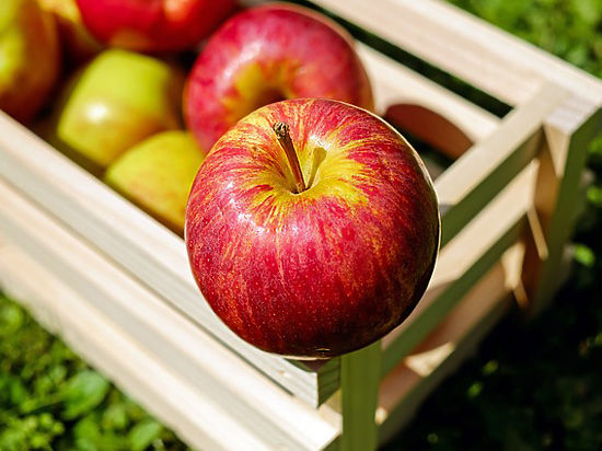 Белоруссия завезла в Россию в пять раз больше яблок, чем успела вырастить