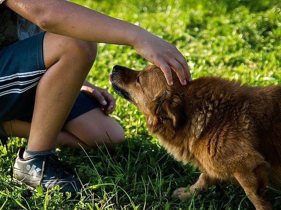 Найдены пять генов, делающих собак друзьями человека