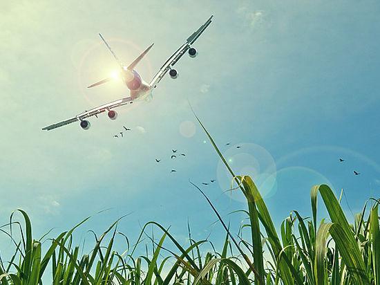 Таможенники летали в командировки на частных самолетах