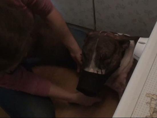 Хозяйка пса, напавшего на пенсионерку, попросила не собирать подписи против питомца