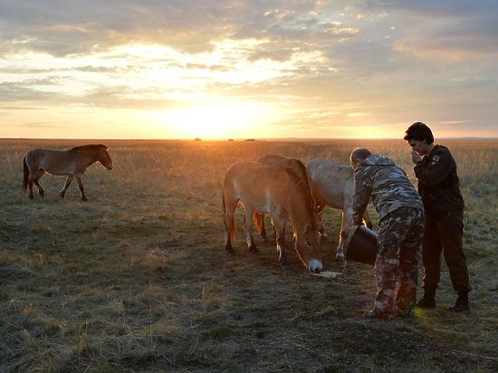 Путин покормил лошадей Пржевальского из старого ведра