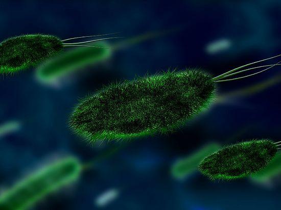 Неизвестная науке бактерия обнаружена в Антарктиде
