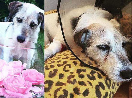 Буйнов потерял своего пятнадцатилетнего джек рассела, но собаку спас таджик