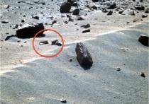 Разглядывая фотографии, отправленные на Землю американским марсоходом Opportunity, уфолог Скотт Уоринг увидел очертания двух загадочных существ, похожих на креведок, скорпионов или еще каких-то животных, тело которых покрыто экзоскелетом