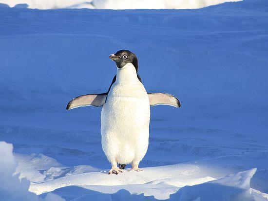 По мнению специалиста, отказ от полета стал для этих птиц эволюционным прорывом