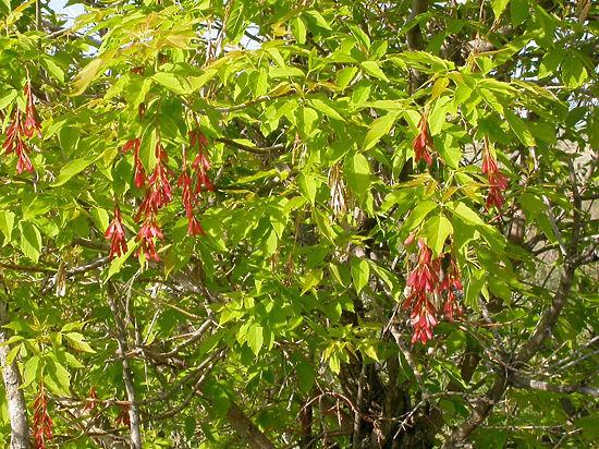 Ботаники рассказали, какие виды деревьев  и трав в нее войдут