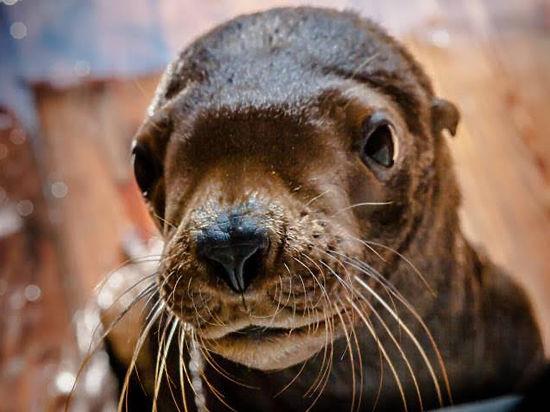 Названа версия гибели очередного животного в приморском океанариуме