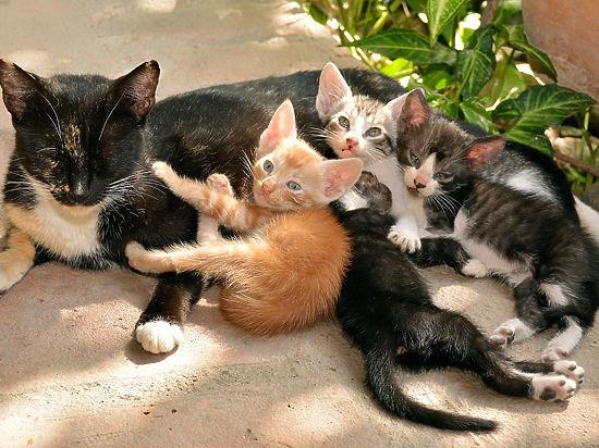 Родились у нас котята: как помочь беременной кошке