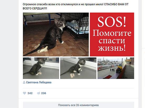 """Жертву детских """"игр"""" доставили в ветеринарную клинику"""