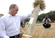Эксперты усомнились в бурном росте пшеницы в России