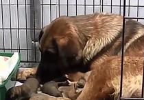 Десять щенят, родившиеся в вагоне метро, подросли и получили имена