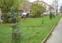 Что сажают, и что нужно сажать на улицах Петрозаводска