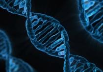 Ученые открыли новое антитело, небывало эффективное против вируса иммунодефицита человека