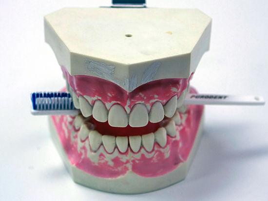 Традицию хранить молочные зубы поддержали генетики