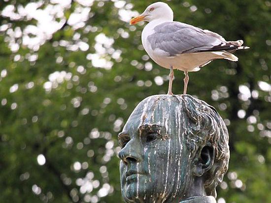 Птичий помет спасает Землю от катастрофы