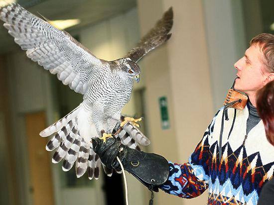 Среди изъятых птиц – родители птенца, подаренного главой государства эмиру Катара