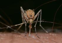 Благодаря мерам по защите территории Черноморского побережья России популяцию комара, способного переносить лихорадку Зика, удалось снизить практически до нуля