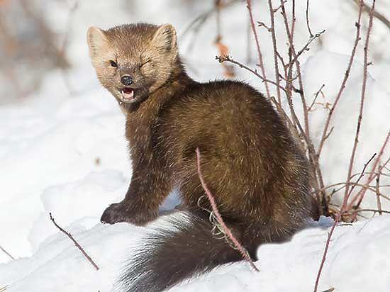 Ежедневный улов байкальского омуля браконьерами достигает полумиллиона рублей