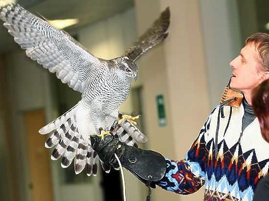 Управляющий Центром передержки диких животных: «Угрозы здоровью выживших птиц нет»