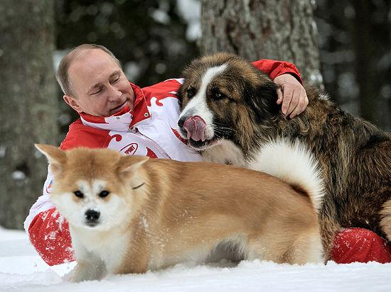 Путин потребовал защитить бездомных животных от вопиющего бесчеловечного отношения