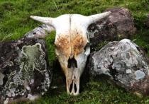 Двойная сенсация: в горной Адыгее найден старый сундук с эмблемой «Аненербе» – самой секретной организации гитлеровской Германии