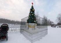 Нелепый способ защитить уличную новогоднюю елку от вандалов нашла дирекция одного из городских парков в подмосковном Долгопрудном