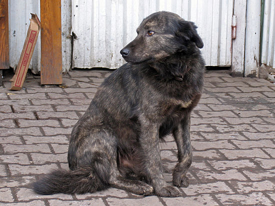 Бездомная собака искусала целую семью в Москве