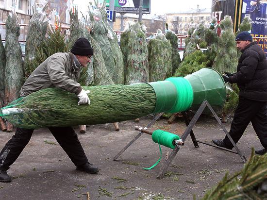 40 процентов новогодних елок в Москве продаются нелегально