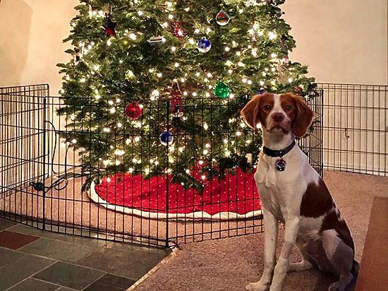 Кошка, собака и елка: как встретить Новый год с животными