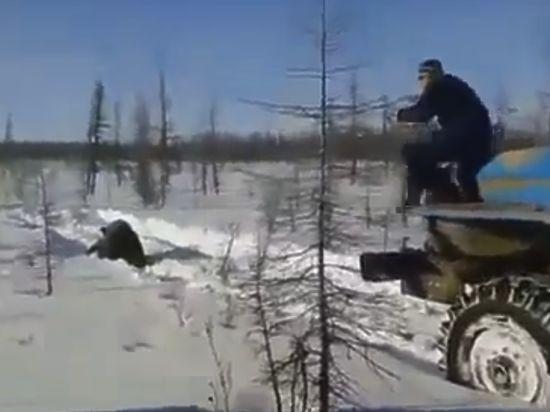 Полиция Якутии проверяет видео жестокого убийства медведя «Уралами»