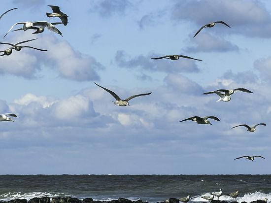 Эксперты прокомментировали версию о столкновении Ту-154 с птицами