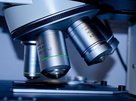 Специалисты нашли ген, предположительно отвечающий за соответствующие качества