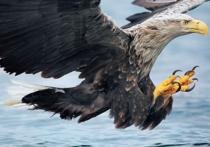 Учет численности диких животных начнется в Нижегородской области 15 января