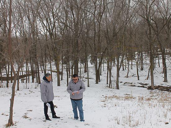 В Элисте пересчитают все деревья