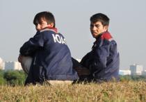 Новый способ борьбы с трудовыми мигрантами-нелегалами придумали в МВД