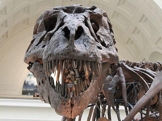 Древний белок сохранился в ребре животного