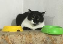 Десятки кошек могут оказаться замурованы управляющей компанией в подвале дома 38/1 на Фрунзенской набережной