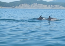 На берег Южного острова Новой Зеландии выбросились около 400 китов, при этом большая часть из них погибла, передают местные СМИ