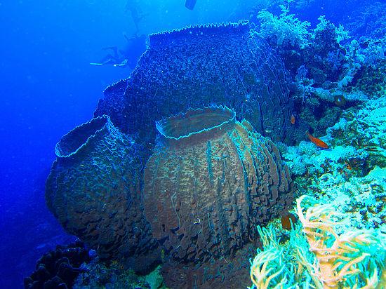 Конец света, по мнению ученых, переживут морские губки