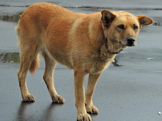 Зоозащитники требуют отменить эвтаназию бродячих собак