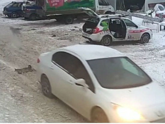 В Самаре полицейские проводят проверку по факту наезда на дворнягу