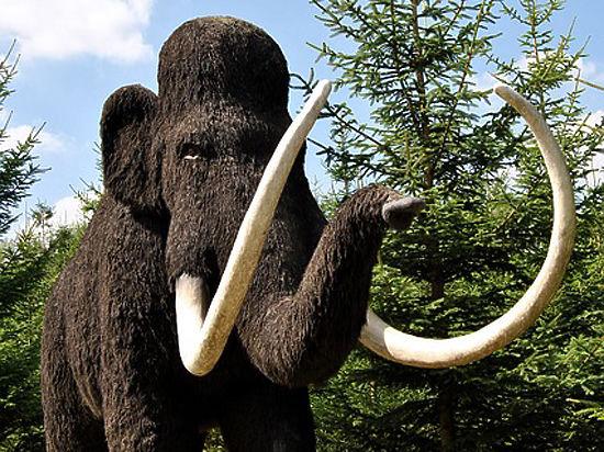 Для этого их скрестят с индийским слоном