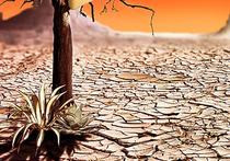 Каждый пятый биологический вид на Земле уже сегодня находится под угрозой вымирания, и уже к концу XXI века их количество может возрасти до 50 процентов