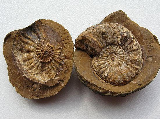 Эти существа обитали на нашей планете около 4 миллиардов лет назад