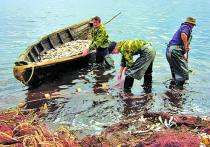 Росрыболовство до сих пор не может решить, что делать с омулем — вводить запрет на всю добычу или только на его промышленный вылов, оставив лазейку для рыбаков-любителей и коренных малочисленных народов