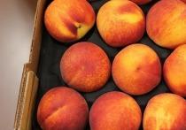 Прописать международные эталонные требования для пекинской капусты и персиков планирует Росcтандарт