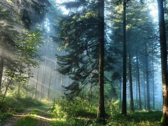Опасный сезон: кузбасским землевладельцам рассказали, как обезопасить лес от пожара