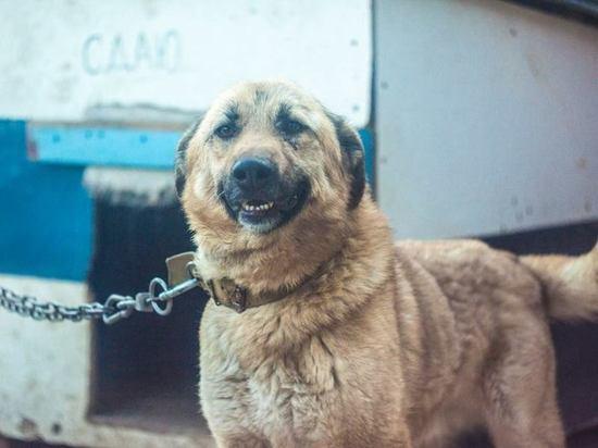 В Евпатории волонтеры поддерживают жизнь брошенных и обездоленных животных