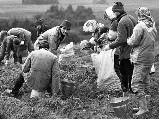 Иначе сельское хозяйство России не спасти