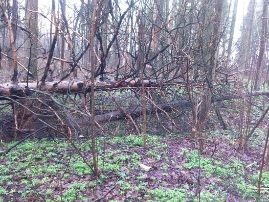 В Московской области  стартует акция «Наш лес»